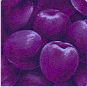 Farmer John's Market - Packed Plums- BACK IN STOCK!