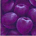 FB-plums-L619