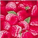 Berry Good - Luscious Raspberries Up Close  - LTD. YARDAGE AVAILABLE