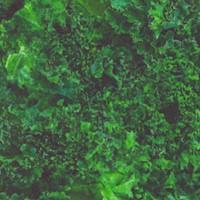 Fresh - Real Kale Up Close by Dan Morris