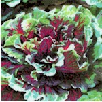 Farmer John's Organic Kale