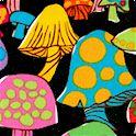 FB-mushrooms-P528