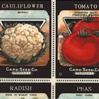 FB-seeds-R721