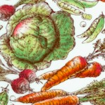 Marketplace - Tossed Vegetables by Sue Schlabach
