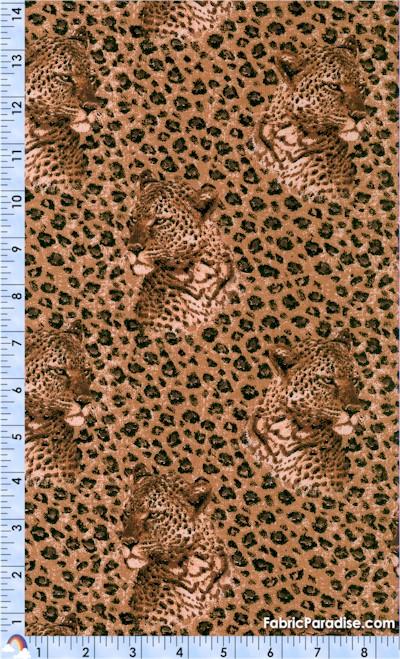 AN-leopard-S551