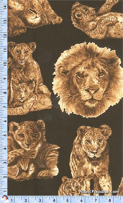 AN-lions-K624