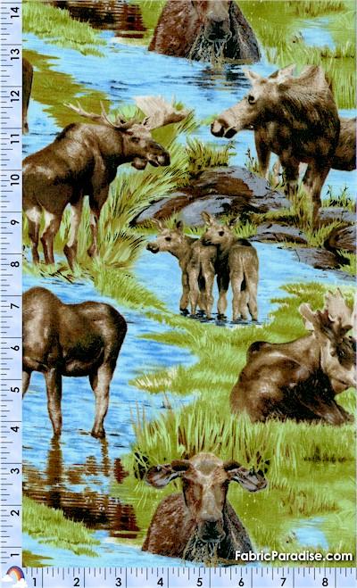 AN-moose-S583