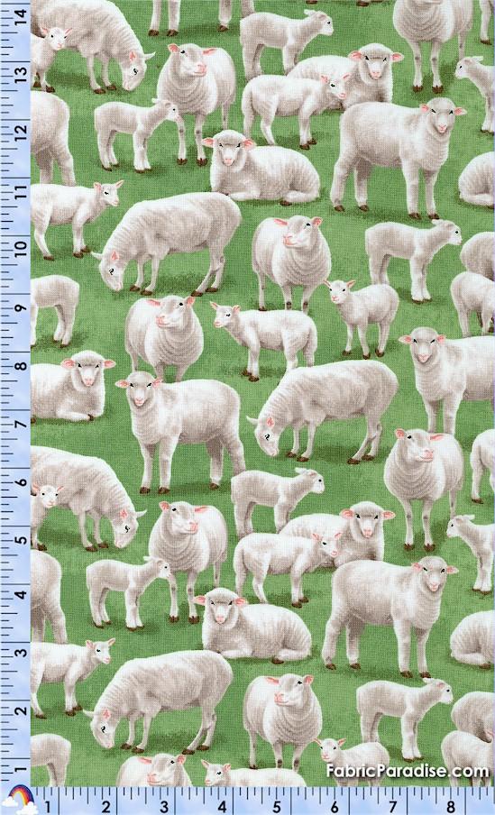AN-sheep-W51