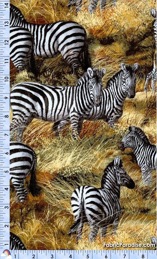 AN-zebras-X531