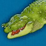 AN-alligators-W283
