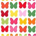 AN-butterflies-P179