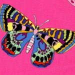 Rio - Marilia Butterfly on Pink