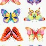 AN-butterflies-Y488