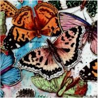 AN-butterflies-Z358