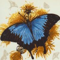 AN-butterflies-Z949