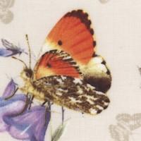 AN-butterflies-Z951