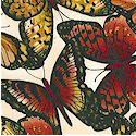 AN-butterfly-M116