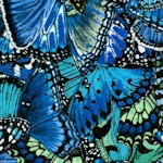 Butterfly Garden - Butterfly Wings in Blue