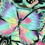 Nature Studies - Exquisite Butterflies #1 (Digital)