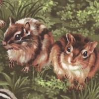 Backyard Bandits II - Chipmunks