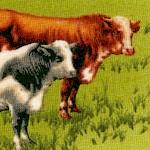 AN-cows-W429