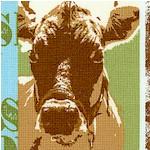 AN-cows-W952