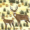 AN-deer-L817