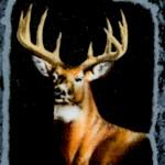AN-deer-W766