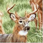 American Wildlife - Real Deer (AN-deer-X407)