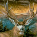 AN-deer-Y581