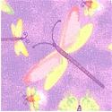 AN-dragonflies-P206