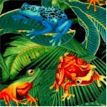 Real Rainforest Frogs