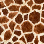 Safari - Giraffe Skin Up Close