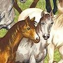AN-horses-K504