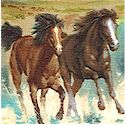 Running with the Wind - Wild Horse Scenes
