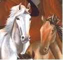 Wild Horse Portraits