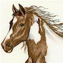 Santa Fe - Running Free Wild Horses