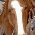 Wild Horses Close Up