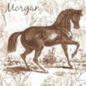 AN-horses-S585