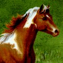 Noble Stature Scenic - Magnificent Horses