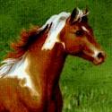 AN-horses-S952