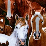 AN-horses-U840