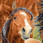 AN-horses-U979
