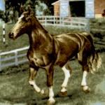 AN-horses-W866