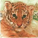 Safari Cats - Young Cubs at Play