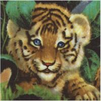 Wild Life - A Rare Occasion