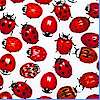 Small-Scale Ladybugs on White - BACK IN STOCK!