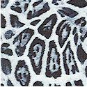 AN-leopard-M670