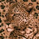 Safari Skin - Leopard Portraits