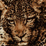 The Wild Side - Exotic Leopard Collage